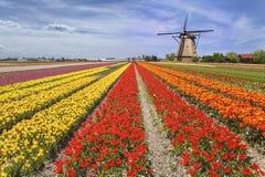 Regenbogenfarbe eines Tulpenbauernhofes Stockfotos