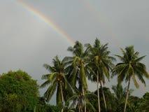Regenbogenland-Baumkokosnuß Stockfotos