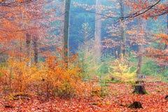 Regenbogenwald Stockbilder