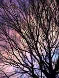 Regenbogenwolken durch Baum Lizenzfreies Stockfoto