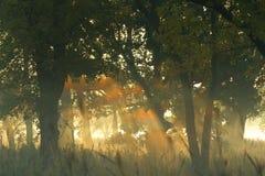 Regenboog 2 van de mist Stock Foto