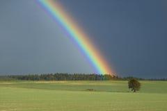 Regenboog boven een boom Stock Afbeeldingen