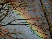 Regenboog door de bomen wordt gezien die Royalty-vrije Stock Foto