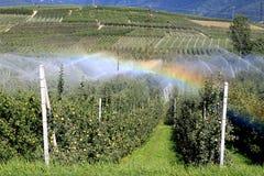 Regenboog door irrigatie van een appelboomgaard, Italië Stock Afbeeldingen