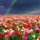 Regenboog en bloemenachtergrond Stock Afbeelding