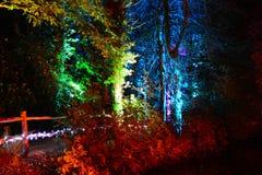 Regenboog Gekleurd Forest Walk bij Nacht Stock Fotografie