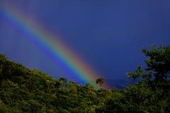Regenboog in het bos stock foto's
