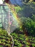 Regenboog in het zonnige hol, in de tuin royalty-vrije stock fotografie