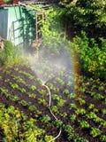 Regenboog in het zonnige hol, in de tuin royalty-vrije stock foto's