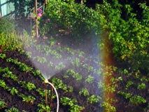 Regenboog in het zonnige hol, in de tuin stock fotografie