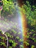 Regenboog in het zonnige hol, in de tuin stock afbeeldingen