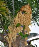Regenboog Lorikeets: Lunchtijd Stock Afbeeldingen