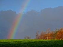 Regenboog op bomen Stock Fotografie