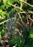 Regenboog op het spinneweb Stock Foto