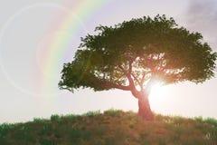 Regenboog over boom op heuvel Stock Afbeeldingen