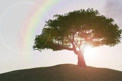 Regenboog over boom op heuvel Stock Foto's