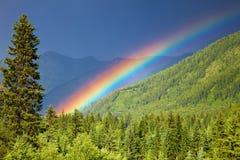 Regenboog over bos