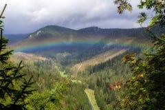 Regenboog over het bos royalty-vrije stock fotografie
