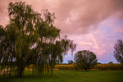 Regenboog over het landbouwbedrijf Stock Foto