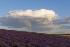 Regenboog over het lavendelgebied stock foto