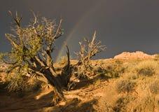 Regenboog over het Nationale Park van Bogen Stock Afbeeldingen