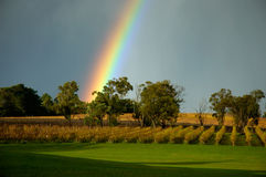 Regenboog over wijnstokken royalty-vrije stock afbeelding