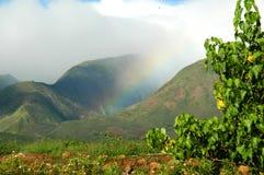Regenboog in Paradijs Stock Foto's
