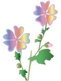 Regenboogbloem Stock Foto