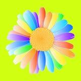 Regenboogmadeliefje stock illustratie