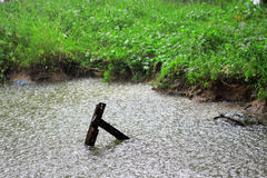 Regendaling in het water met uitstekende houten in kanaal, als aard Stock Fotografie