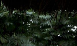 Regendalingen die onderaan van bamboedak vallen Royalty-vrije Stock Foto's