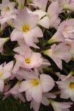 Regendalingen op bloemen Stock Afbeeldingen