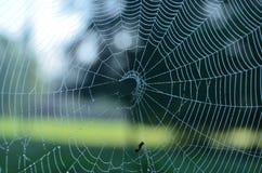 Regendalingen op een spinneweb Stock Afbeelding