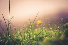 Regendalingen op gras royalty-vrije stock foto