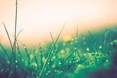 Regendalingen op gras stock foto