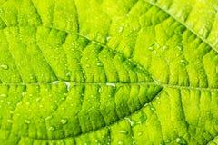 Regendalingen op groene bladinstallatie als achtergrond Selectieve nadruk Stock Foto