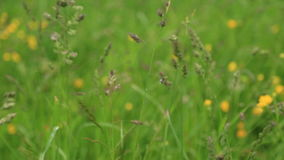 Regendalingen op het gras stock video