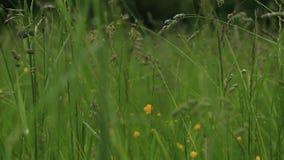 Regendalingen op het gras stock videobeelden
