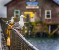 Regendalingen op Zeemeeuwen bij de Kustwacht Boat House van de V.S. royalty-vrije stock foto