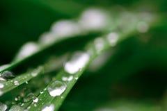 Regendruppel op een blad Royalty-vrije Stock Foto