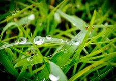 Regendruppel op groen gras Stock Afbeelding