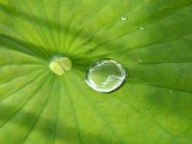 Regendruppel op lotusbloemblad Royalty-vrije Stock Afbeeldingen