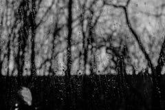 regendruppels Stock Foto