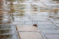 Regendruppels die op de Tegels van het Pooldek ploeteren Stock Afbeelding