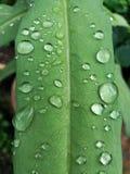 Regendruppels die op het blad vallen Stock Afbeeldingen