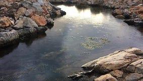 Regendruppels en rimpelingen op de waterspiegel stock footage