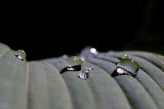 regendruppels op blad Royalty-vrije Stock Foto's