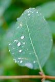 regendruppels op blad Stock Fotografie