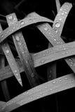 Regendruppels op bladeren Royalty-vrije Stock Fotografie