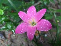 Regendruppels op bloem Stock Foto's